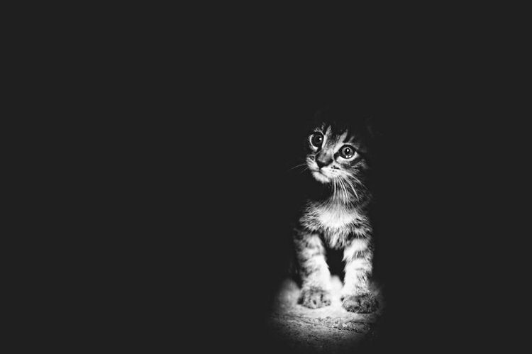 mysterious-cats-photography-12