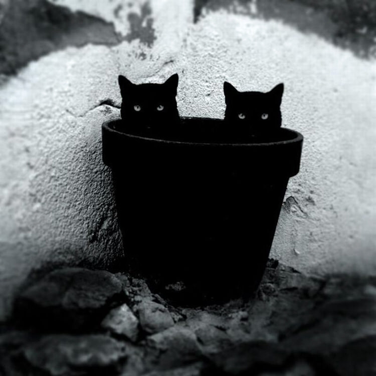 mysterious-cats-photography-13