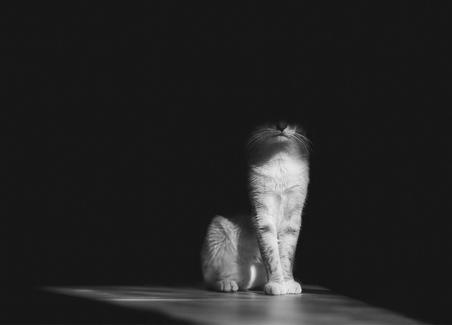 mysterious-cats-photography-6