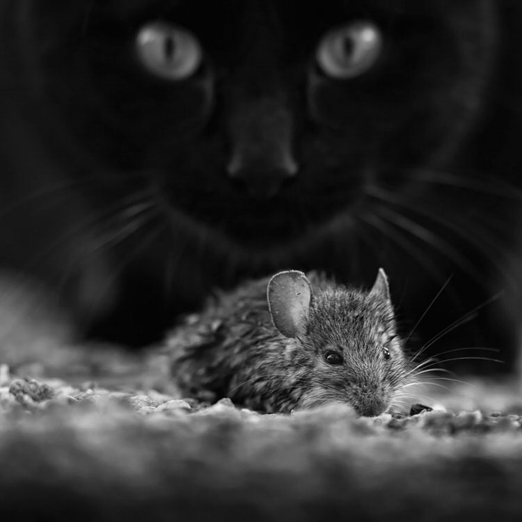 mysterious-cats-photography-7