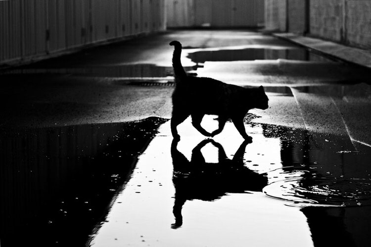mysterious-cats-photography-9